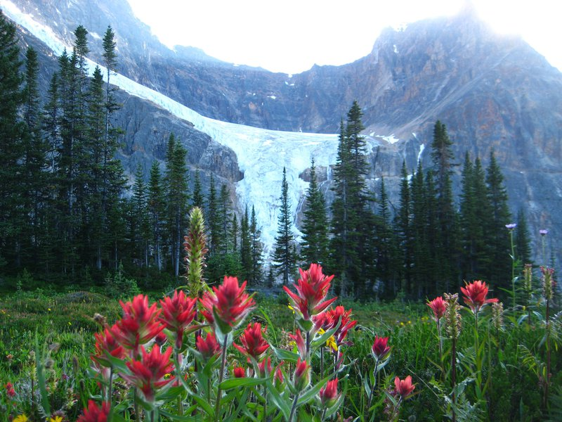 Mt Edith Cavell - Jasper Hikes and Tours