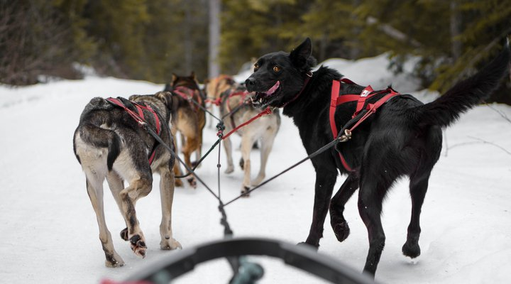 Dog Sledding and Sleigh Rides